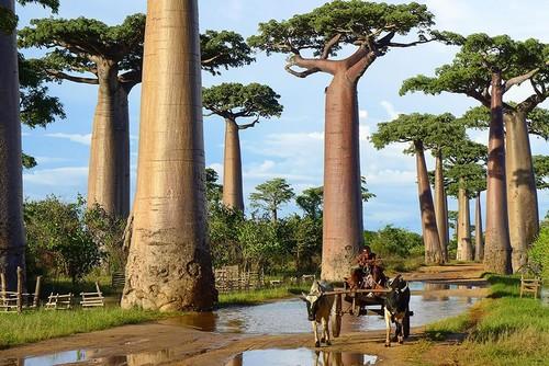 76805-880-1447278246amazing-trees-11.jpg