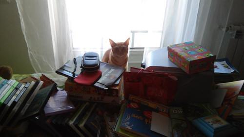 gatostressado.jpg