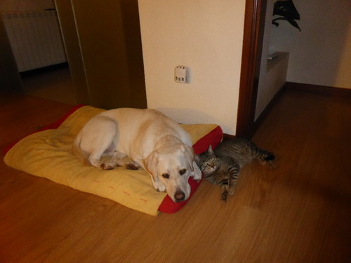 Tobias Gato dormem juntos.JPG