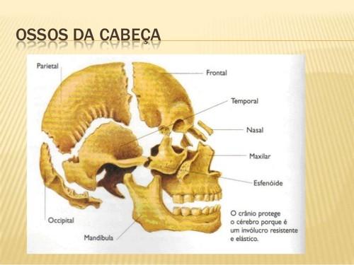 sistema-esqueletico-divisao-do-esqueleto-4-638.jpg