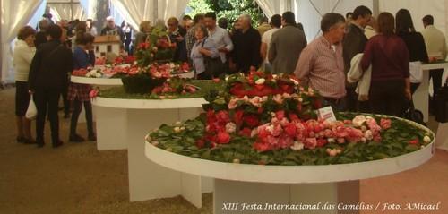 9 - XIII Festa Internacional das Camélias - Celor