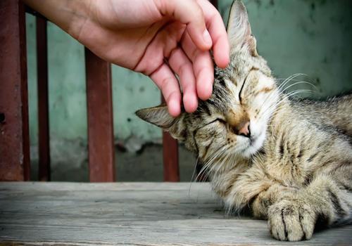 gato-carinho[1].png