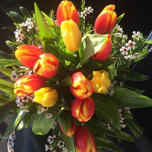 tulipas87_n.jpg