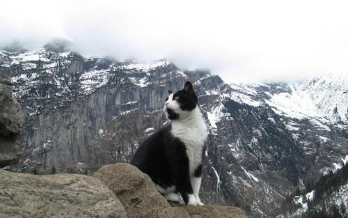 cat-gimmelwald-jg0bGqX-large.jpg