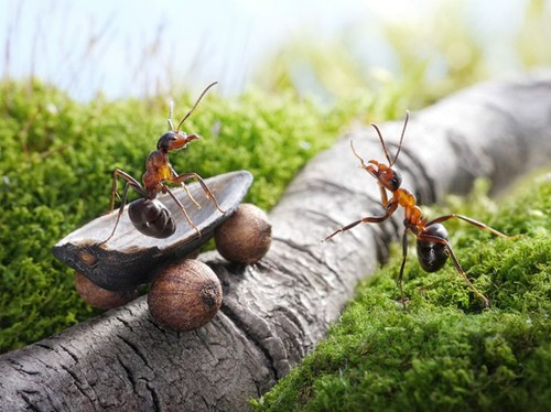 Formigas.jpg