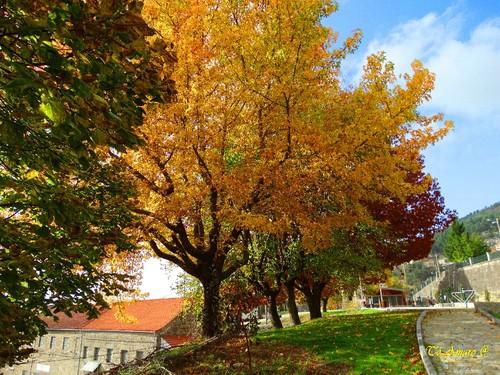 Fotos de Outono !!! 021.jpg