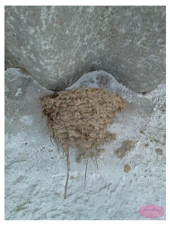 As andorinhas.png
