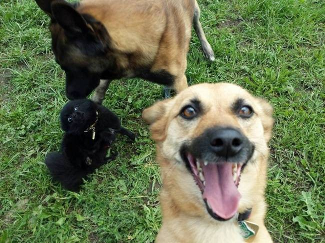 Selfie-Cachorro-1.jpg