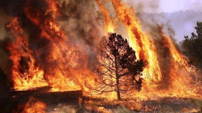 incendios-4_770x433_acf_cropped RAMISCAL.jpg
