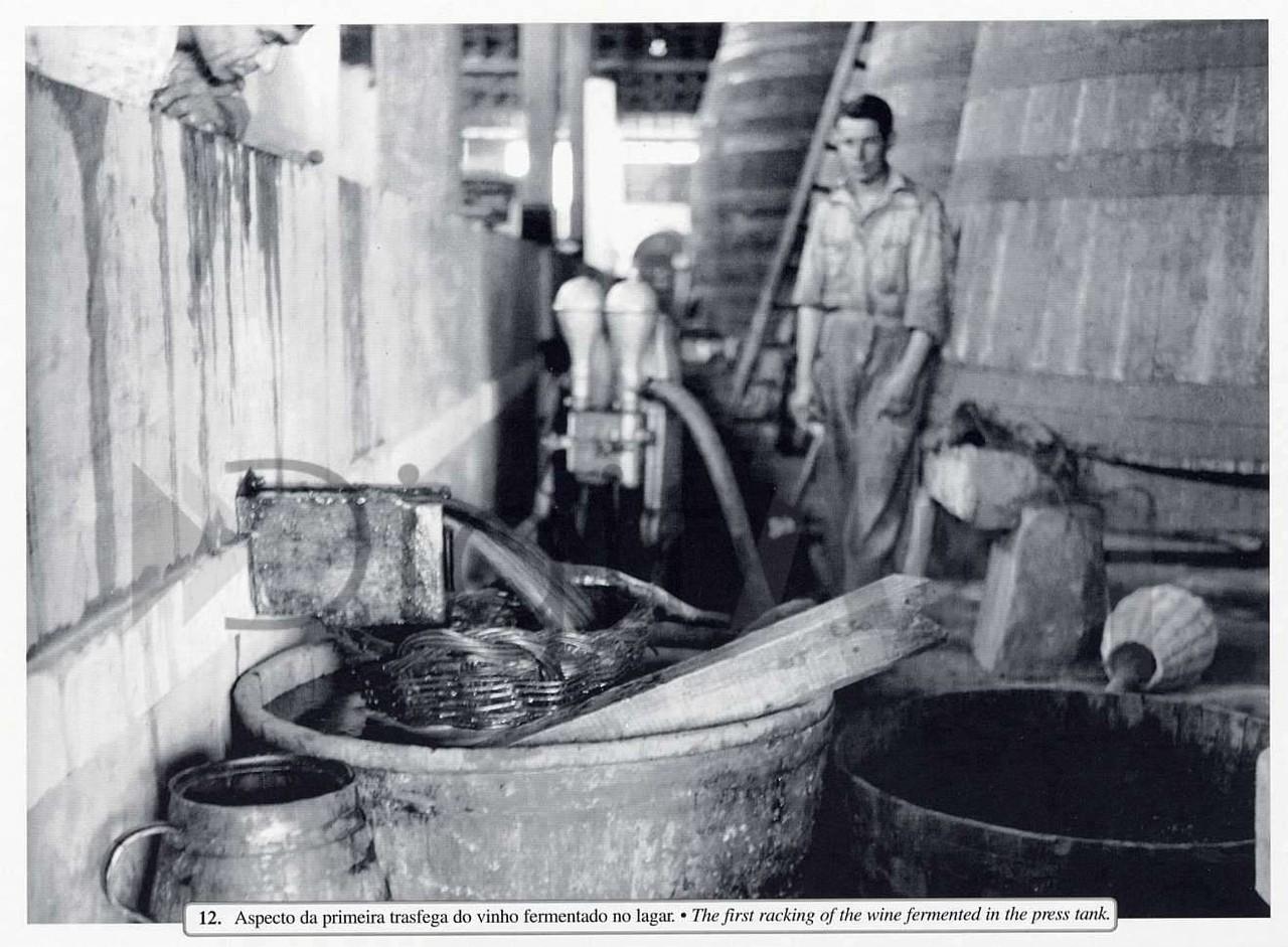 Aspecto da primeira transfega do vinho fermentado