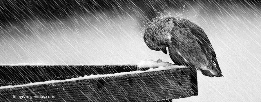Pássaro à chuva