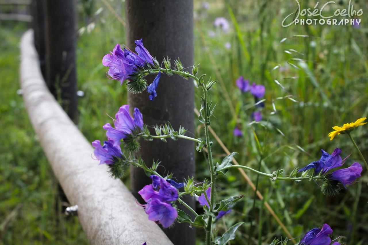 flores flor flower purple rinchoa parque fitares