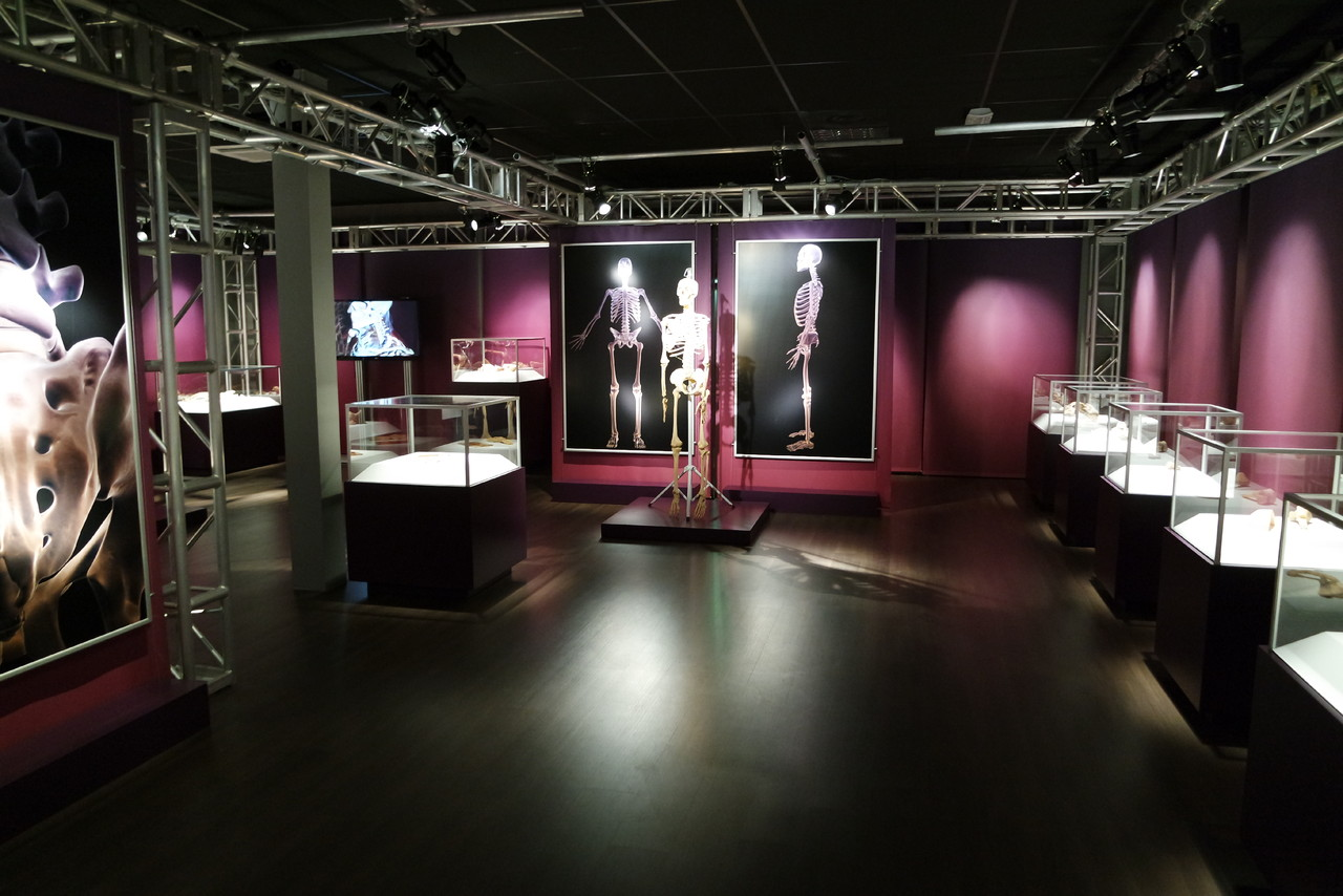 Real Bodies Interior de galeria 1.JPG