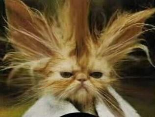 cabelo-em-pe.jpg