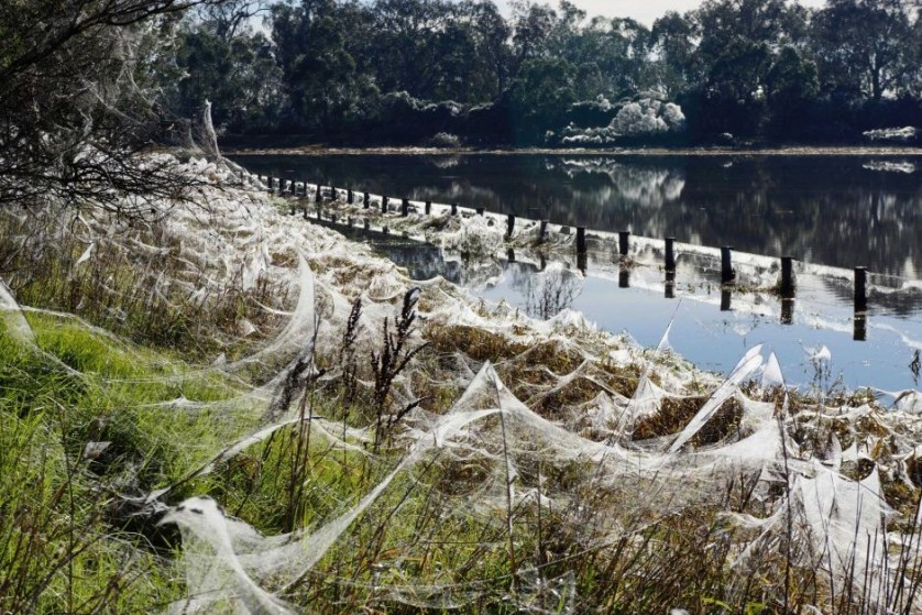 chuva-de-aranhas-australia2-838x559.jpg