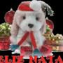 feliz-natal-mensagens_581838910_feliz-natal_673992