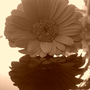 Flor_I....JPG