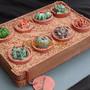 3D Cake Cactus Garden