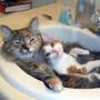 cats-in-sink.jpg