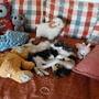 gatos e peluches.JPG