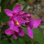 flores14.jpg
