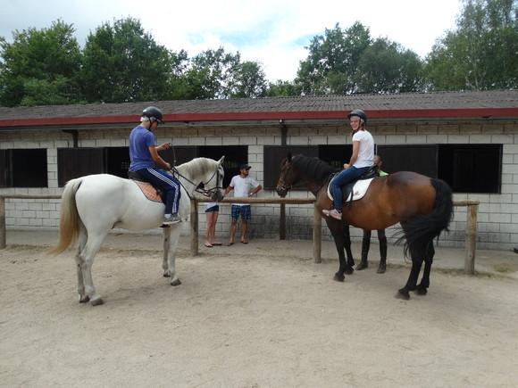 cavalos 3.JPG