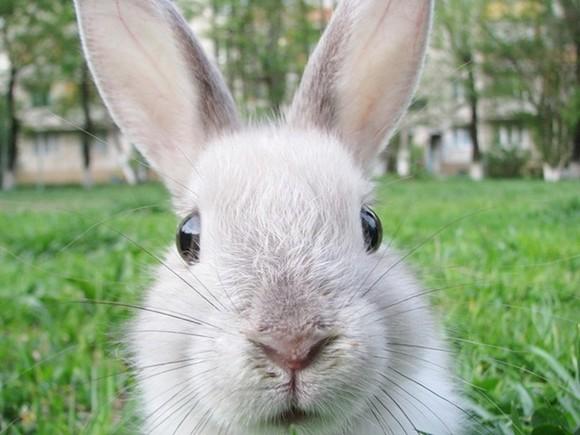 foto-coelho