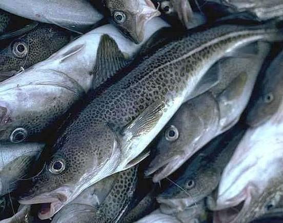 pesca_bacalhau2_GR.jpg