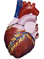 arterial.png