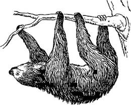 Bicho preguiça (Imagem Pixabay)