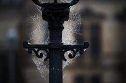 Teias aranha poste iluminação Dresden, Alemanha