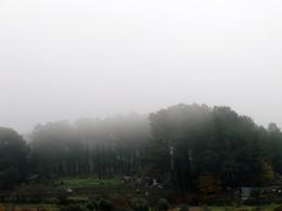 Nevoeiro