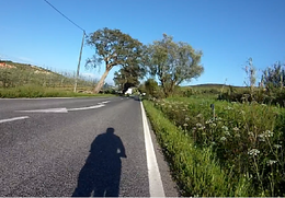passeio de bicicleta.png