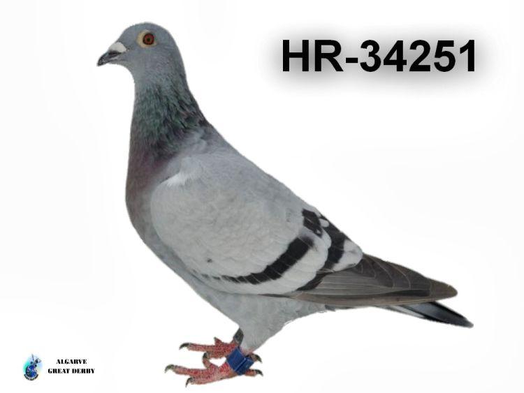 HR-34251.jpg