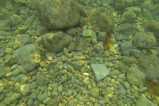 fish_snorkeling