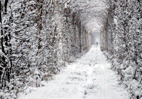 para-conhecer-tunel-do-amor-na-ucrania-380447-3.jp