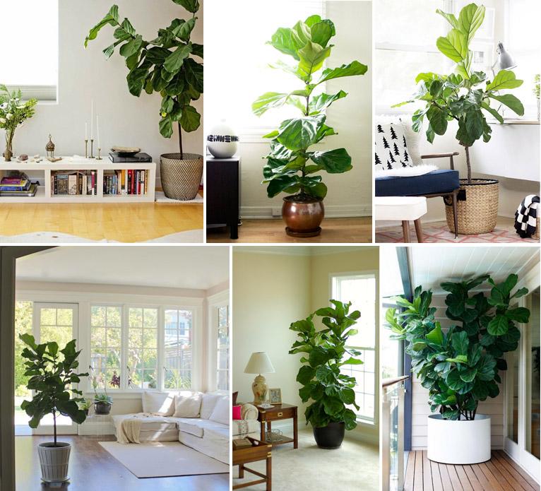10 plantas para interiores e ideias de decora o - Plantas grandes para interiores ...