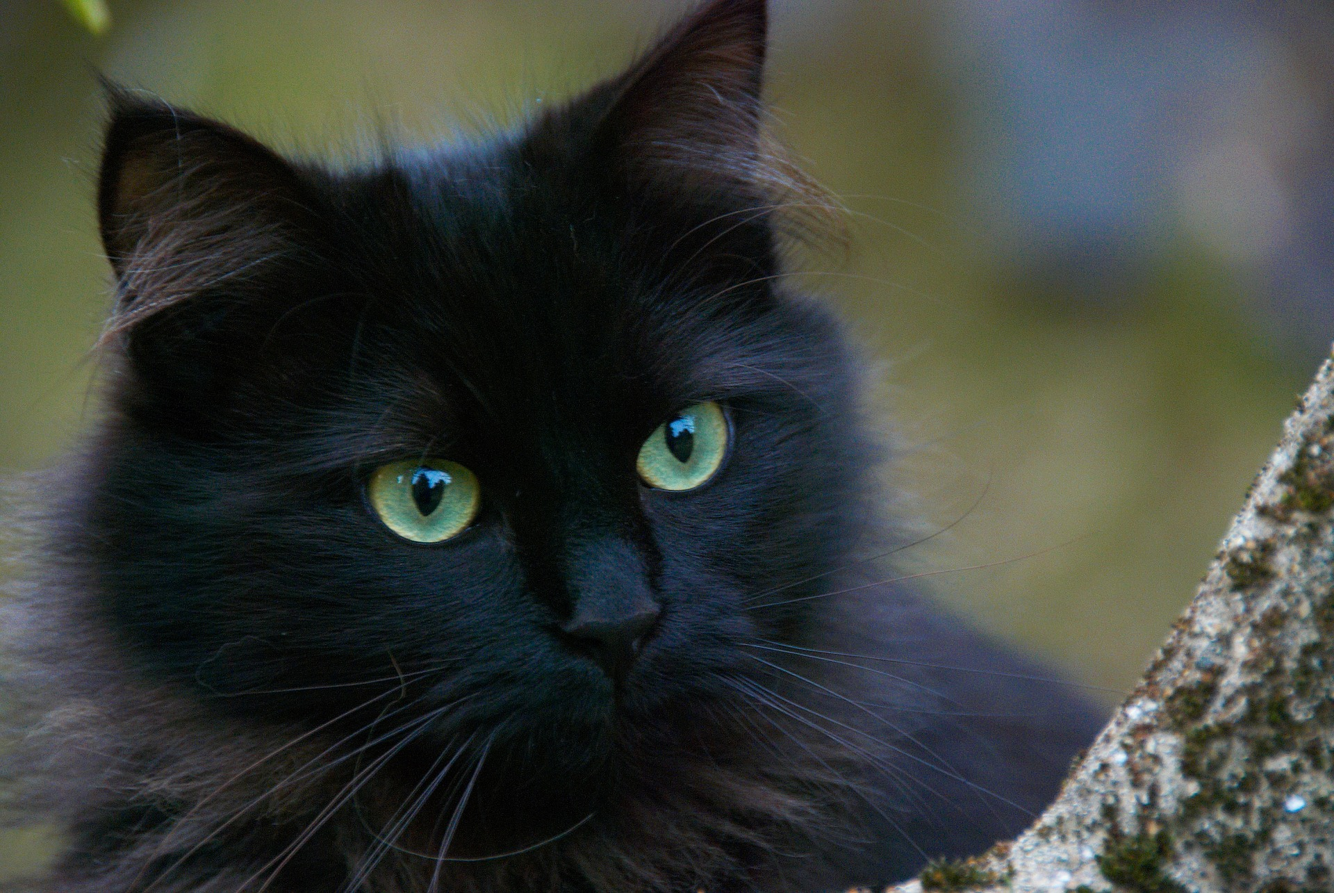 black-cat-375866_1920.jpg