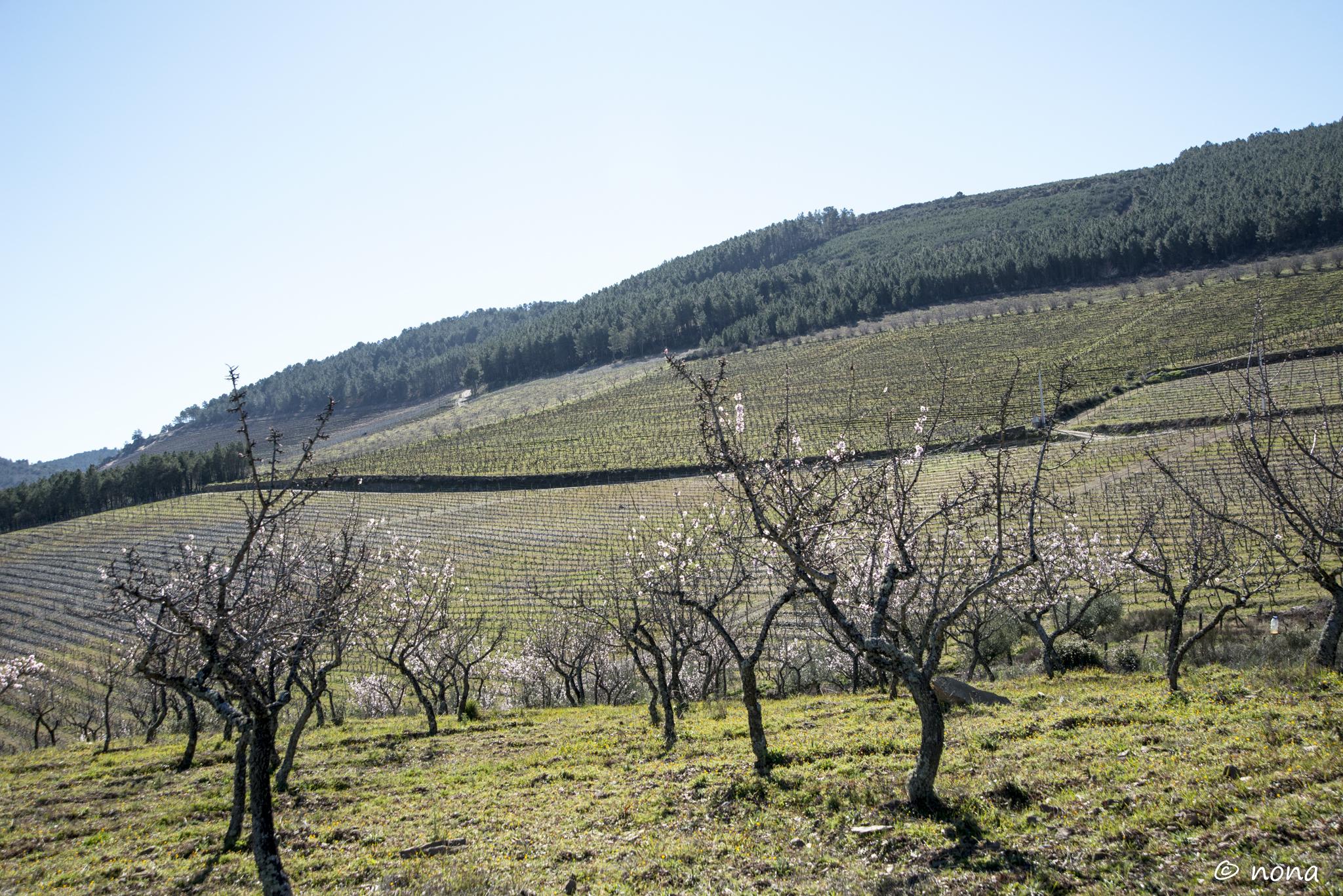 2015 - Rota das Amendoeiras (122).jpg