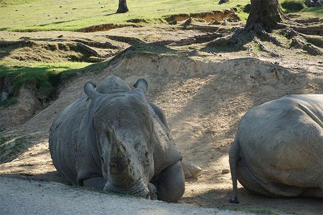 nashorn_03_safaripark