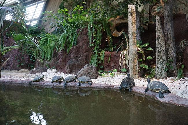 Schildkröten.jpg