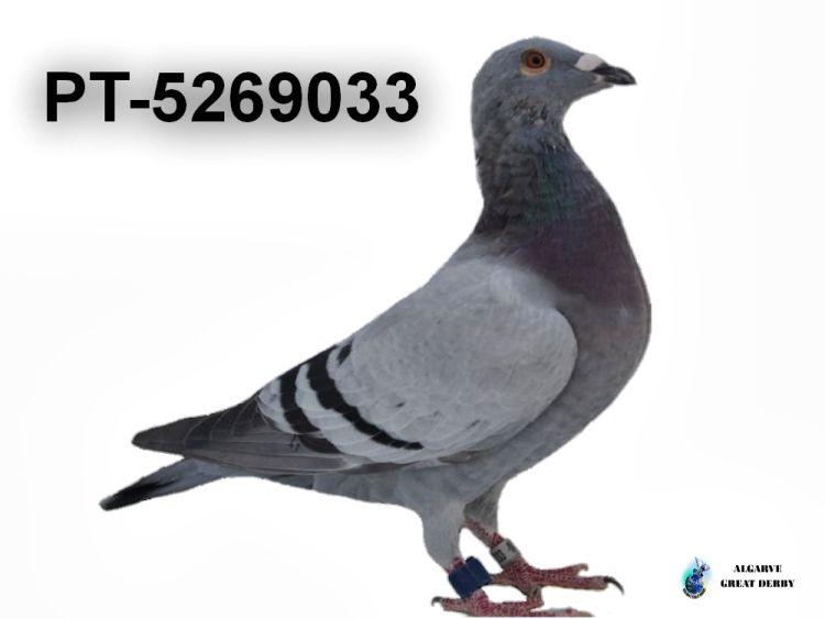 PT-5269033.jpg
