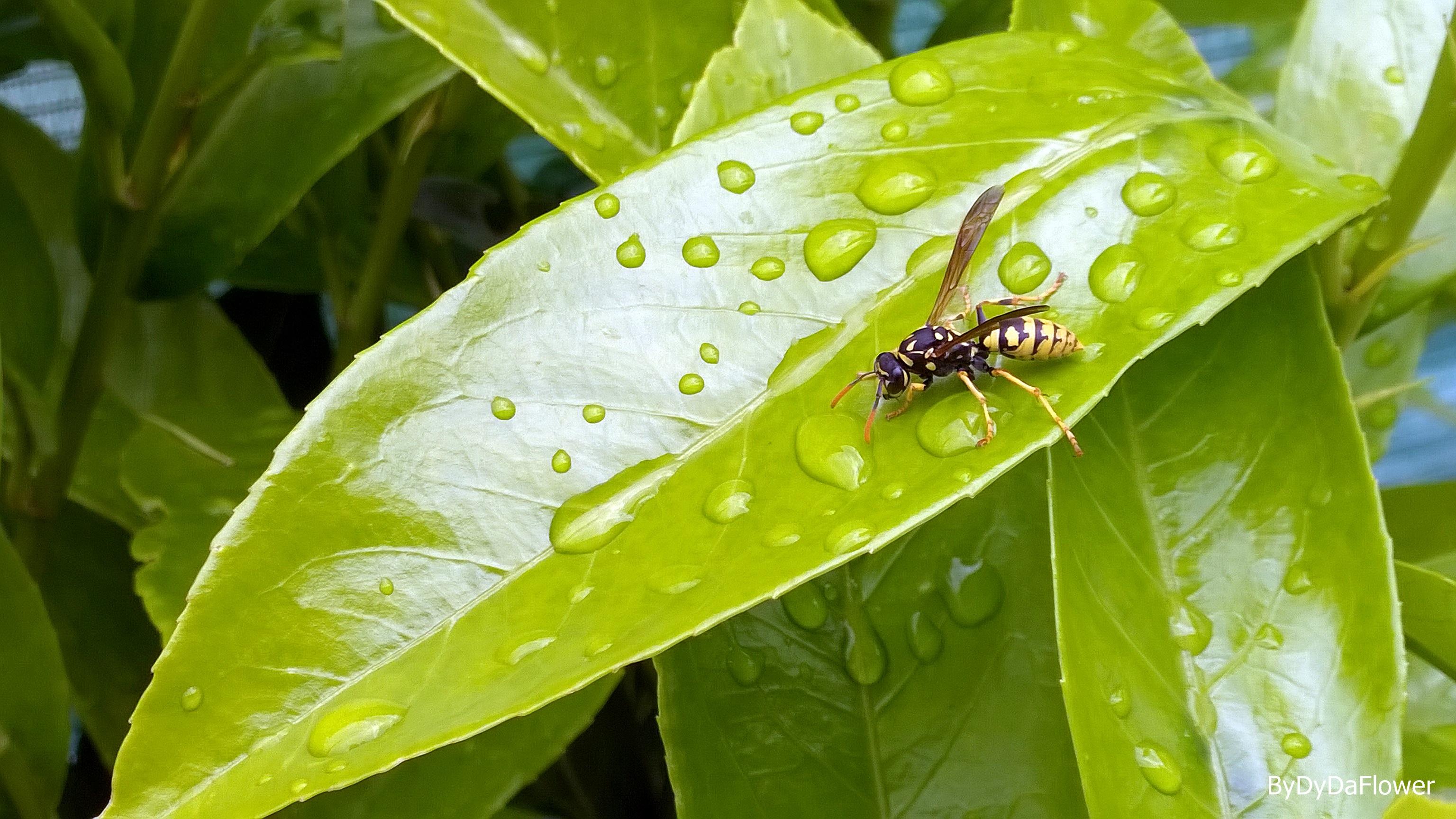 a abelha no banho.jpg
